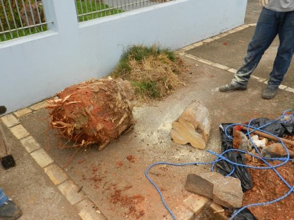 Fig. 16 - Toco das raízes, muito pesado.