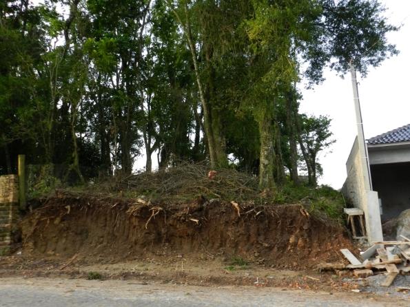 Fig. 23 - Terreno escavado, onde é possível observar a estreita camada de raízes, junto da superfície.