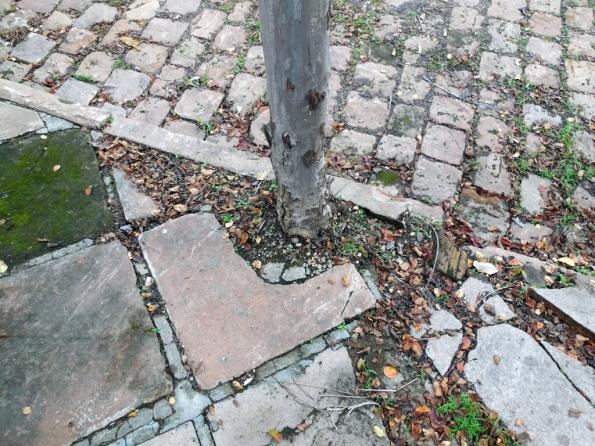 Fig. 32 – Árvore com diminuto espaço para as raízes; a planta aproveitará cada chance para ampliar seu sistema radicular e poderá, ao longo do tempo, levantar a calçada.