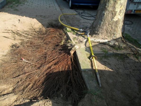 Fig. 43 – Sistema radicular de árvore exposto após escavação com pá pneumática, observe como são finas e inúmeras essas raízes. Fonte: BoomOntzorging [37].