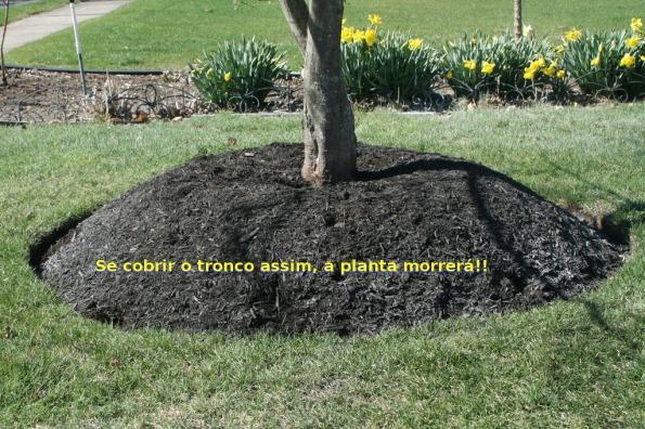 """Fig. 53 – """"Árvore-vulcão"""", envolta com matéria orgânica demasiadamente alta, que pode levar a planta à morte. Fonte: Reed's Garden Ramblings [52]."""