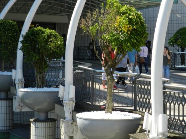Fig. 54 – Vasos com mudas de ficus, uma espécie extremamente resistente e invasiva, que aguenta crises hídricas e maus tratos, mas, ainda assim, pode sofrer. Fica na entrada de um shopping em Porto Alegre, RS.