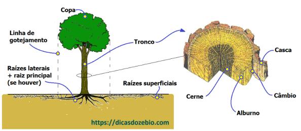 Fig. 55 - Partes constituintes das árvores.