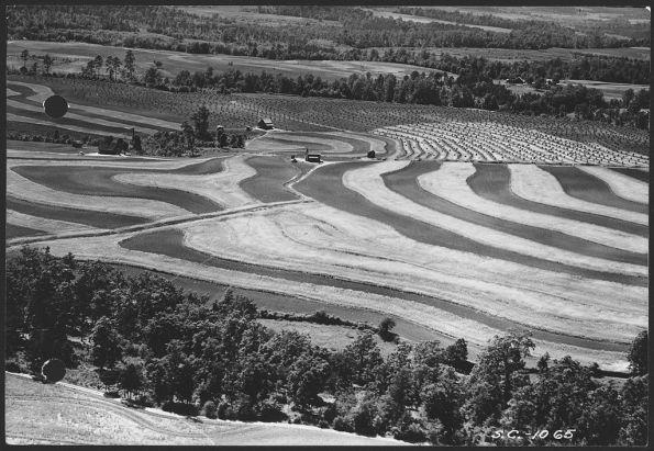 Fig. 86 – Prática de agricultura de contorno já em 1930, no Missouri, EUA. Fonte: Wikimedia Commons [140].