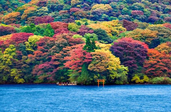 Fig. 89 – Lago Ashi, em Hakone, Japão. As cores são das folhas das árvores, na época de outono. Foto de Ricardo Bevilaqua, obtida de My Tour [147].