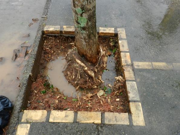 Fig. 9 - Raízes removidas até a chuva impedir os trabalhos.